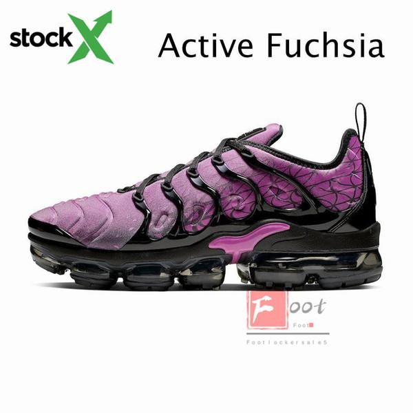 Fuchsia attiva