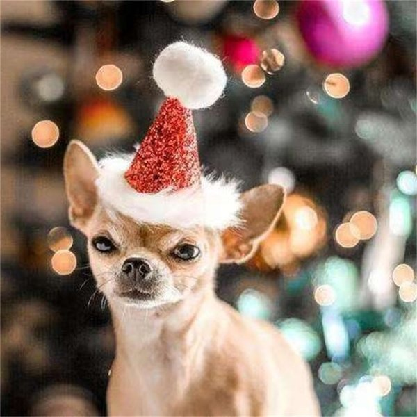 Wholesales Free shipping Hot Pet dog cat Christmas headdress Pet bow tie Christmas hat Factory direct cross-border exclusive