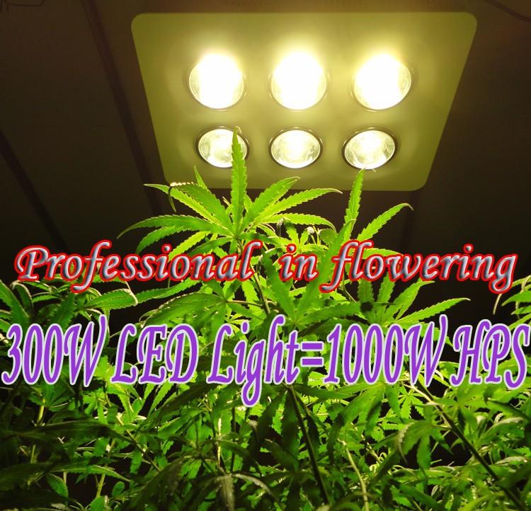 300W led lights=1000W hps