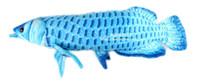бесплатный рыбацкий материал оптовых-Оптовая-Бесплатная Доставка! Золото Arowana 67 см супер размер плюшевые большие рыбы мультфильм плюшевые игрушки мягкие игрушки животных подушка детские игрушки длинные подушки