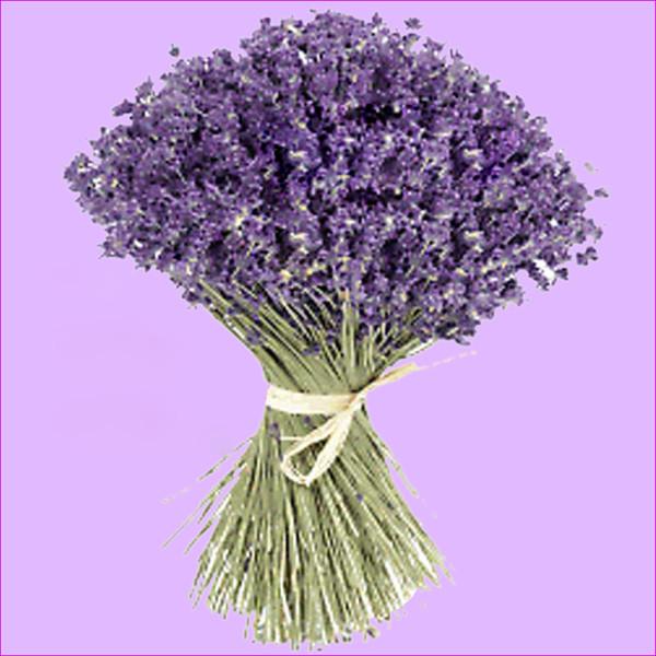 Купить сухоцветы лаванду оптом онлайн заказ доставки цветов
