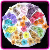 Wholesale Dried Petals - 12 Color Dried Flower Petal Nail Art Tips Design