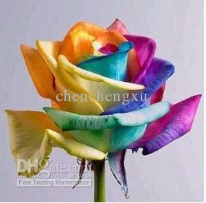 2018 100 chromatic rose seeds package rainbow flower for Growing rainbow roses from seeds