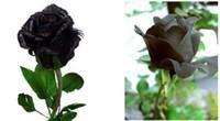 orkide maymun yüzü çiçek tohumları toptan satış-100 Tohumlar, Siyah Gül Tohumları, Çiçek Tohumları, CPAM tarafından Ücretsiz Kargo