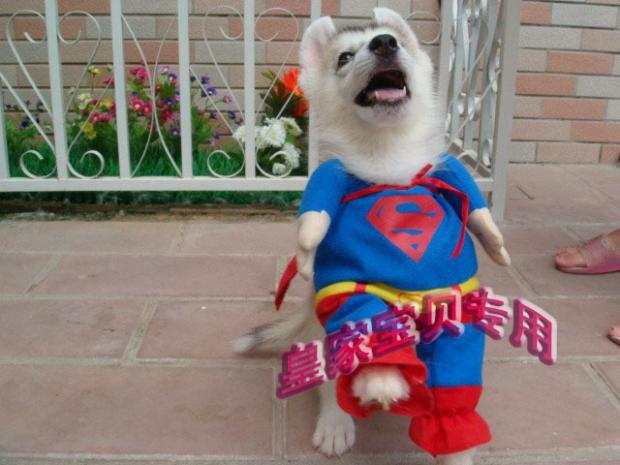 Best SUPER DOG CLOTH Dog Clothing Superman Costumes for Dogs Cute Pet Dogu0027s ClothesCostume Online with $98.37/Piece on Toy2011u0027s Store | DHgate.com & Best SUPER DOG CLOTH Dog Clothing Superman Costumes for Dogs Cute ...