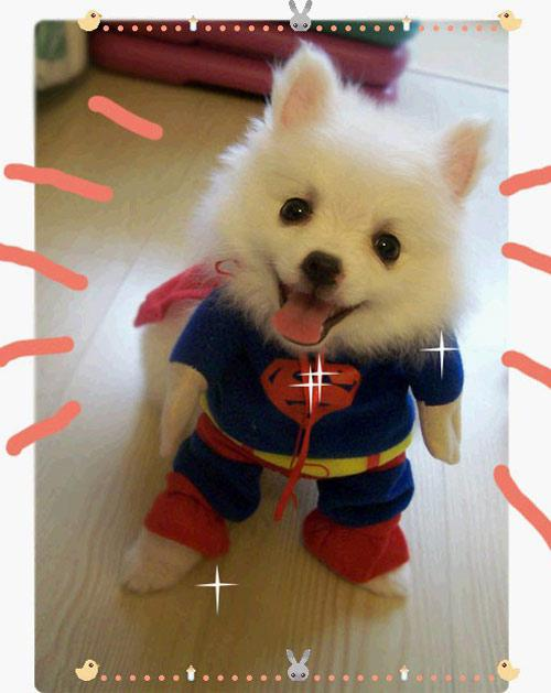 Pet Costumes Dog Clothes Superman cloak Size XS/S/M/L/XL free ship #3077
