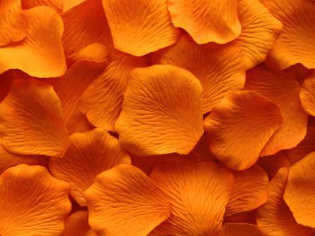 Orange Silk Rose Petal Petals Bröllop Favoriter Party Dekoration eller Välj färger