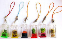 Wholesale Pet Plants - Funny Real Pet Plant Mini Plant Fancy Pet tree cell phone bag Accessories Novelty Gift key chain