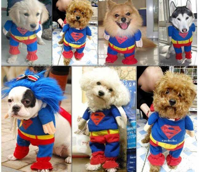 Cheap Holders for Clothes Hangers Best New Born Unisex Clothes & SUPERMAN Pet Cat Dog Costume Party Clothes Cosplay ~FUN XS S M L ...