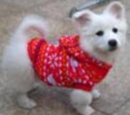 Envío gratis perro suéter de navidad ropa de abrigo con sombrero XS S M L XL orden mezclada