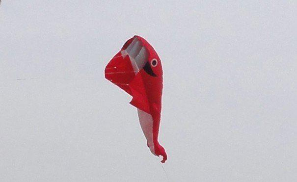 2,1 M 3D énorme parafoil baleine cerf-volant / rouge livraison gratuite!