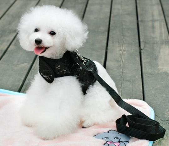 giltter batman design hund sele koppel set med spök charm svart husdjur valp cool mjuk sele bälte