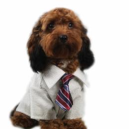 Wholesale Elastic Cat Collars - Factory Sale New Pet Elastic Neckties Tie Bow Pet Tie Dog Pet Clothes Cat Dog Ties BOWS TIES Collars