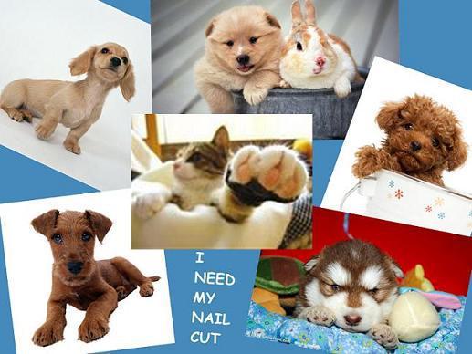 無料送料無料ペット犬猫ネイルクリッパー鋏のグルーミングシアーズトリマー2色V5T01