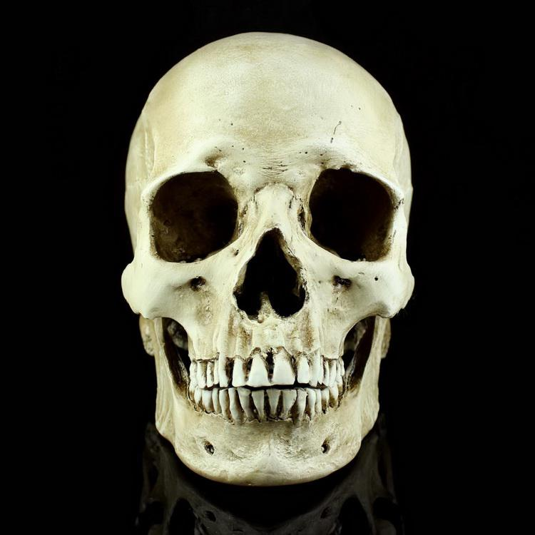 medical skull model high simulation 1:1 skeleton human skull model, Skeleton