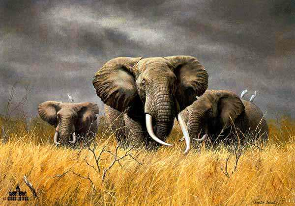 Elephant Oil Painting Canvas