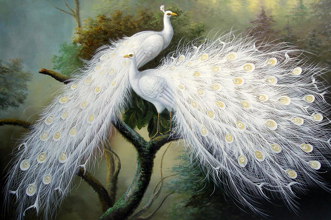 2018 white peacock living oil painting animal painting for Animal oil paintings