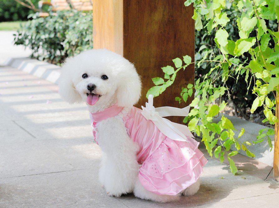 2018 Lovely Dog Pet Wedding Dress Cute Party Dinner Bride ...