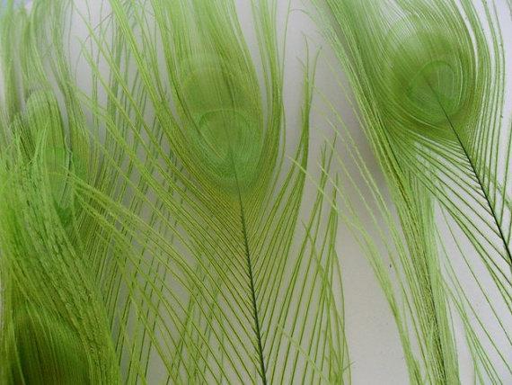 Frete Grátis 10-12 polegada 25-30 cm de Alta Qualidade cal verde Pena de Pavão para decoração, ornamentação artesanato casamentos