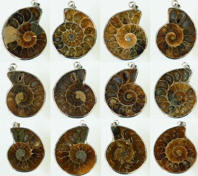 Million Years Old Madagascar Ammonite Conch Sea Snail Whelk Fossil Opened Mixed Silver Plated /Natural conch Pendant pendant 20pcs