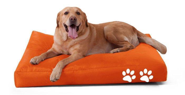 гороскоп апрель собака спит на обуви реализована само