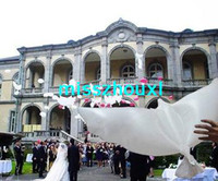 Wholesale Dove Balloons - New design Wedding white biodegradable dove balloon Free shipping