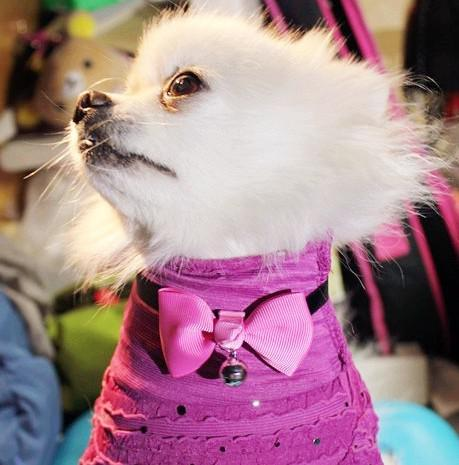 Novo estilo pet cat dog collar ajustável gravata borboleta com sino de prata handmake misturado 15 estilos 30 pçs / lote