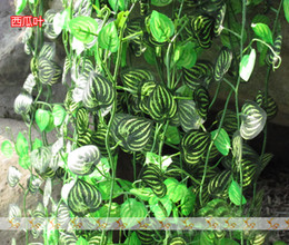 $enCountryForm.capitalKeyWord Canada - 96m lot Elegant Watermelon Flower Vine Green Vine Wisteria Plants Balcony Decoration FZ12-3