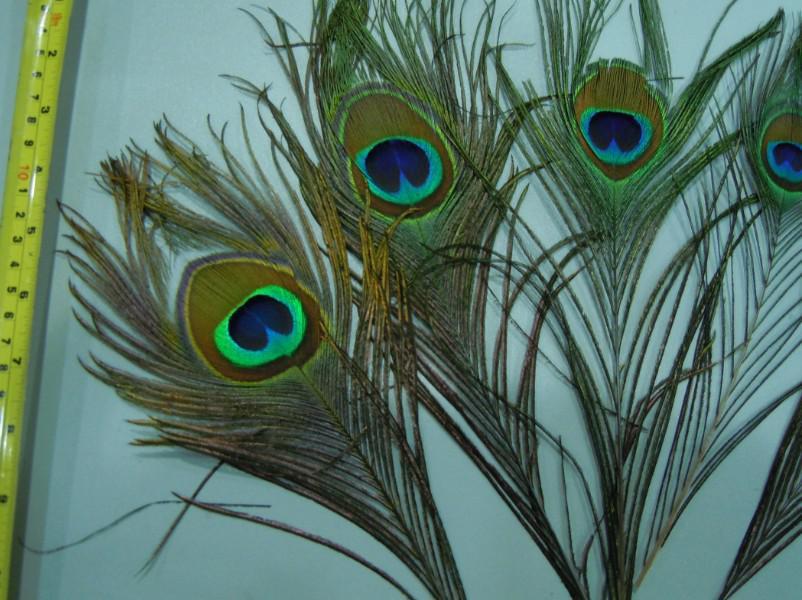 Livraison gratuite Top qualité plume de paon belle plume de paon naturel 10-12inch