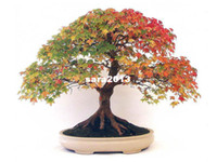 Wholesale 18 BONSAI CANADIAN MAPLE TREE SEEDS MINI PLANTS NEW LIVE FRESH SEEDS DIY HOME GARDEN SHIPS FREE