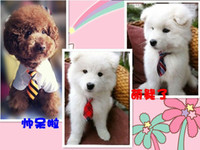 Vente en gros - Nouveau! 10 pcs Forme Polyester Soie Pet Dog Cravate Ajustable Handsome Bow Tie Necktie Grooming Supplies