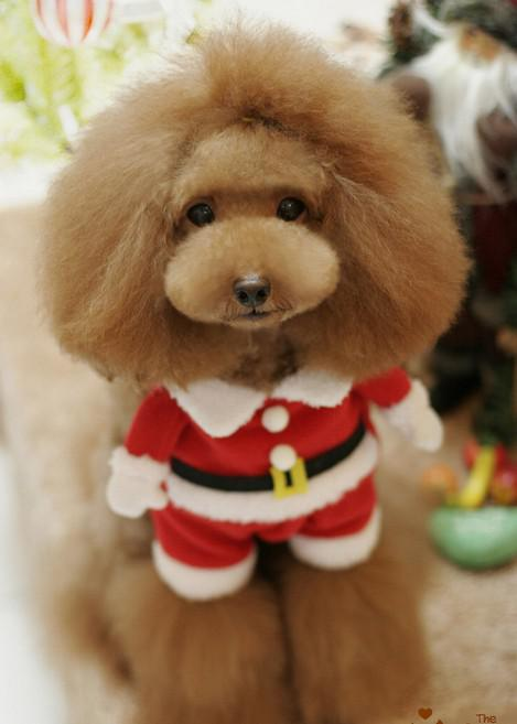 Cute Christmas Puppies.2019 Pet Puppy Super Cute Christmas Pet Costume Hat From Chengxin6688 Price Dhgate Com