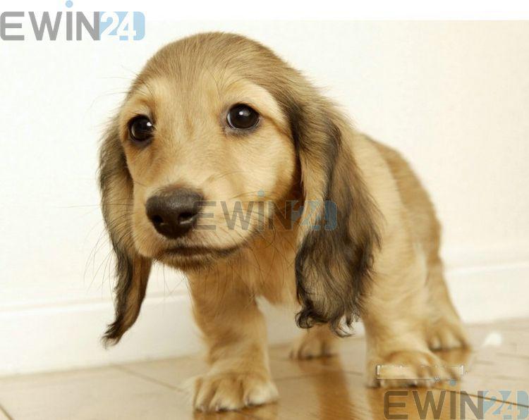 ペット犬の猫のための暖かい暖房のパッドベッドウォーマー20w 30x40cmの高品質