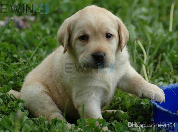 Britse plug veilig verwarmd kussen bedwarming 20 w voor huisdier hond kat 30x40cm hoge kwaliteit 50 stks