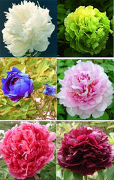 total flowers Canada - Chinese Blue Green White Black Pink Red Peony Flower Seeds  1 Pack 10 Seeds 6 Color Total 60 Seeds