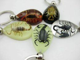 $enCountryForm.capitalKeyWord NZ - free shipping yqtdmy 12 pcs High ice drop mix scorpion keychain TAXIDERMY Jewelry