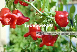 Wholesale Pepper Fruit - 50 pcs UFO spicy Pepper Pepper Seeds Vegetable Seeds Fruit compact width 5cm free shipping