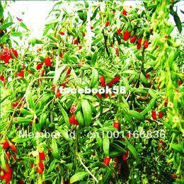 Wholesale Wholesalers Goji Berries - 200 Organic HIMALAYAN TIBETAN GOJI BERRY WOLFBERRY FRUIT Bush Lycium Barbabarum Seeds