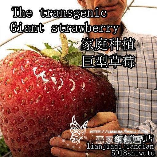giant strawberry seeds sweet 300 Seeds red fruit strawberry seeds FRUIT SEEDS VEGETABLE SEED Garden free shipping