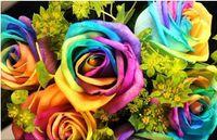çiçek tohumları holland toptan satış-Sevgiliye 300 Tohumlar Nadir Hollanda Gökkuşağı Gül Çiçek Tohumu çin gül