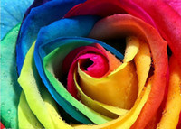 100 Seeds Rare Holland Rainbow Rose Flower Seeds violetta bo...