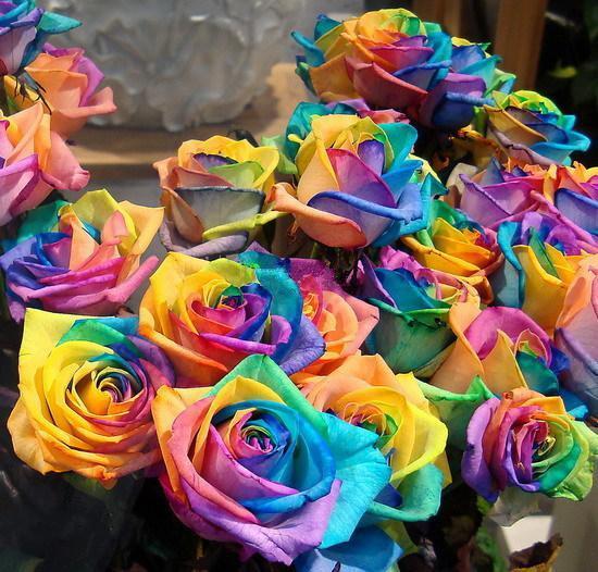 판매 레인보우 로즈 씨앗 * 패키지 당 100 종 * 레인보우 컬러 정원 식물