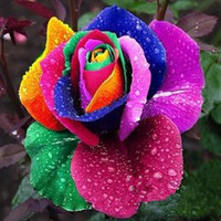 Wholesale plant seed flower - Sale Rainbow Rose Seeds *100 Seeds Per Package* Rainbow Color Garden Plants