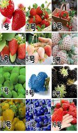 Frete Grátis, 12 tipos de sementes de morango vermelho azul verde amarelo branco preto morango Estações Semeadura frutas sementes de 12 Pacotes de 1000 sementes de