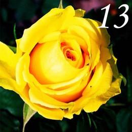 plantes roses du désert Promotion Heirloom 16 Couleurs Rose Noire Graines Vivaces Double Fleurs Graines Bluk Graines Fournisseurs 500pcs / lot RY1414