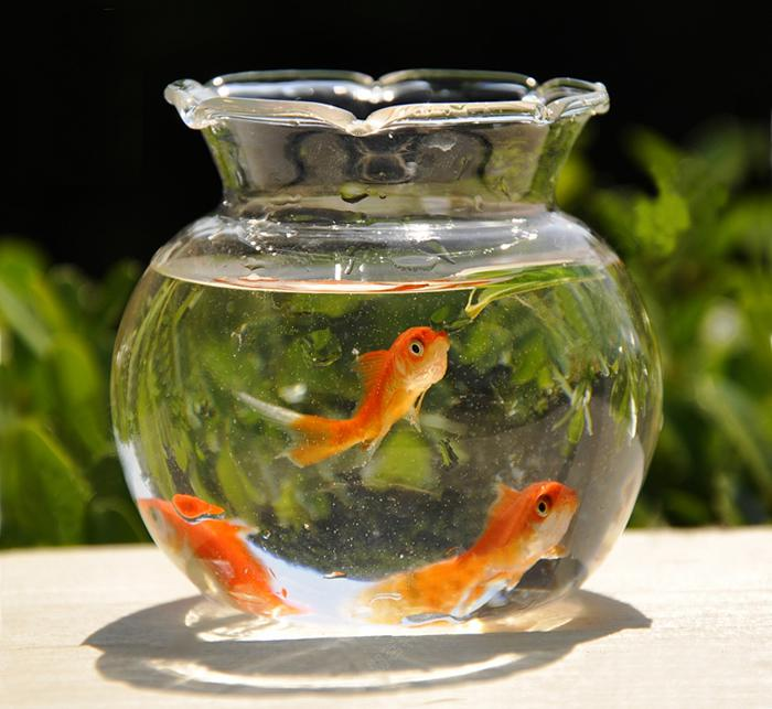 Classical Dia 8cm Glass Vase Fish Bowl Fish Jar Fish Tank