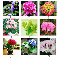 Wholesale Flower Germination - 22 Colors High Germination Geranium Seeds Pelargonium Flower Bulk Seeds for Planting Beautiful Seeds 500pcs lot RY1464