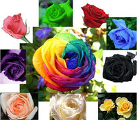 semillas plantas rosas al por mayor-Venta al por mayor - 10 colores mezclan semillas de rosas Planta total 200 semillas Flor colorida Jardín de jardín Fácil de sobrevivir10