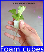 Other packing cubes sale - Foam cubes for starting seeds for hydroponics system pack top sale new hight quality