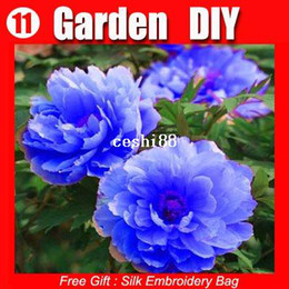 Wholesale Peonies Seeds - FREE SHIPPING 100 Seeds Chinese Rare Blue Peony Flower Seeds Beautiful lovely HOT PEONY 11